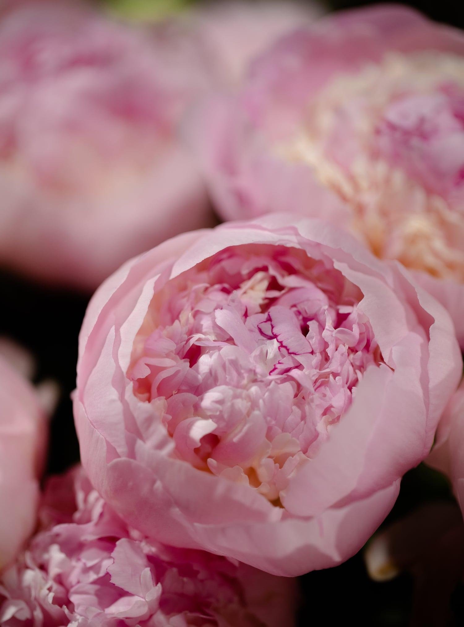 By Liqin Wang-Designer floral Paris